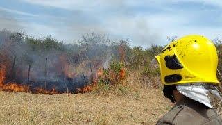 Bombeiros combatem maior incêndio florestal de 2016