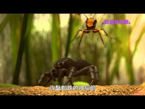 《昆蟲捉迷藏》精雕細啄的建築巨匠,癱瘓獵物的麻醉天才【牆角建築師:狩獵蜂】 - YouTube