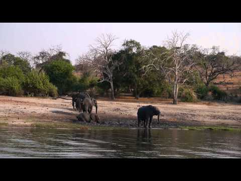 Elephants washing in the Chobe River, South Africa – 2 Idiots Abroad