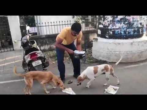 dog feeding chennai