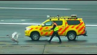 SWAN ON RUNWAY! Delays 20+ aircraft at Heathrow Airport!