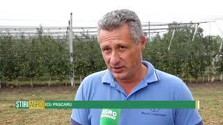 Moldova, atractivă pentru creșterea alunelor