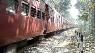 Train in Jungle