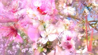 """""""Waltz of the Blossoming Trees"""" by Rebecca Tripp (Remastered)"""