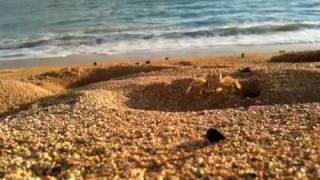 Sand Crab At Salt Pond