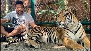 ተዋናይ ሄኖክ ወንድሙና ነብሩ ተፋጠጡ - ምን አይነት ድፍረት ነው - Henok Scary Moment With Tiger (New Video) 2020
