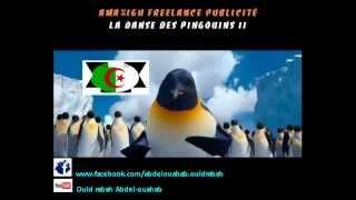 La danse des pingouins II - version kabyle
