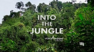 Into the Jungle around the calmness of Nature - Slow TV