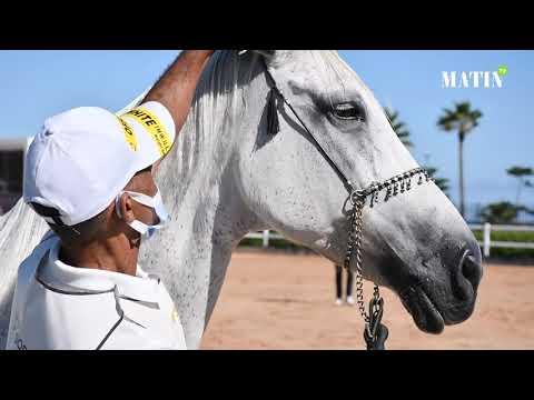 Video : Clôture de la 4e édition du Meeting national des chevaux Barbes et Arabes-Barbes