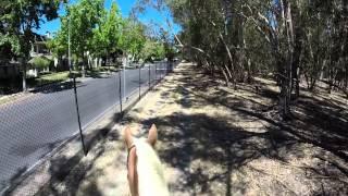 Riding Through The Grove