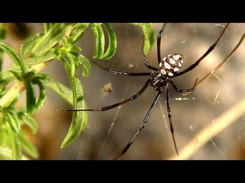 Come identificare i vari tipi di ragni animali dal mondo for Tipi di case in italia