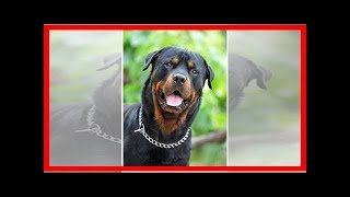 Top-Wachhunde