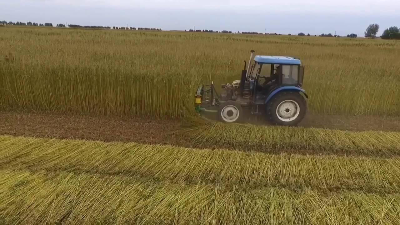 Tractor mounted cutter - CBD & Hemp Products   Hemp Trade Market