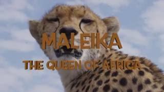 Maleika - Die Königin von Afrika / The Queen of Africa