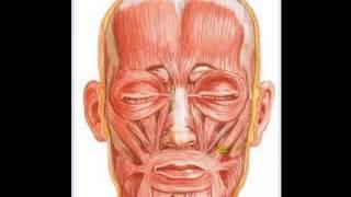 Localização dos Músculos da face visão frontal