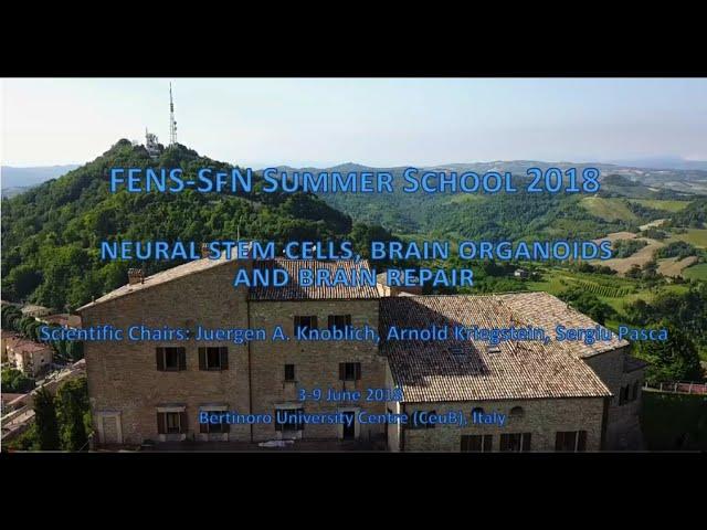 FENS-SfN Summer School 2018 on Neural stem cells, brain orgaoids and brain repair