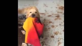 El perro que hace desastre una casa