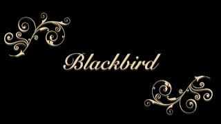 Blackbird Cover - Stop motion video