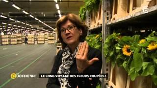 Les Pays-Bas, le passage obligé des fleurs coupées