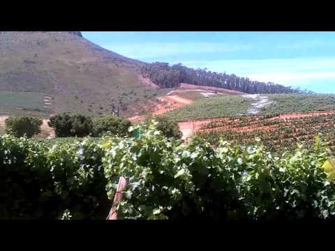 Stellenbosh, S. Africa Wine Tour Pt. II
