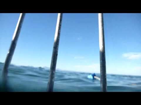2012-07 – South Africa: Great White Shark cage diving in Mo