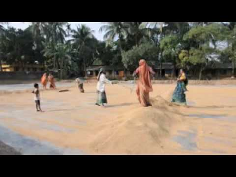 Drying Rice 04.mov