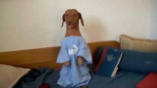 daschund dog funny snoopy