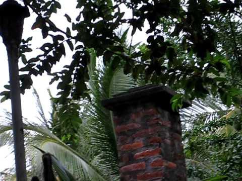 Monkey – Nicaragua