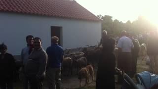 Romaria Festa Santo Antonio
