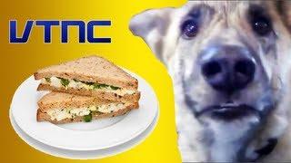 Cachorro Falante  Malicioso -Vtnc''