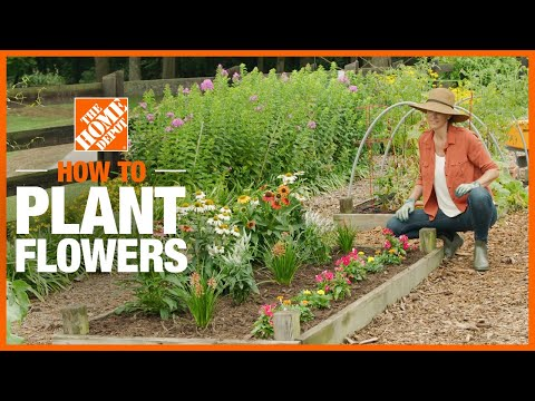 A video shows how to plant flowers.