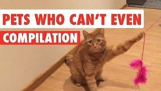 Struggle Bus Pets Video Compilation 2017