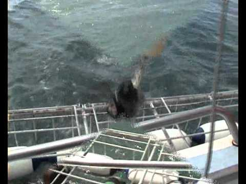 Gansbaai, South Africa, Shark Cage Diving, 4th January 2012.wmv