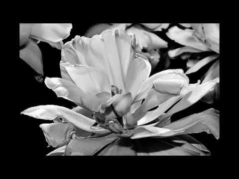 Heaven de Brandi Carlile Letra y Video