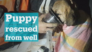 Trapped puppy saved by Turkish robotics students