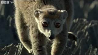 Cute Lemurs Cross Razor-Sharp Cliffs - Madagascar, Preview - BBC Two