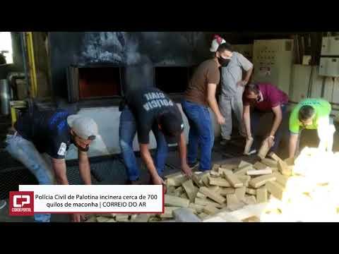 Polícia Civil de Palotina incinera cerca de 700 quilos de maconha