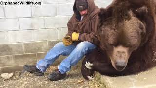 When your bear had a hard day and needs some extra love....