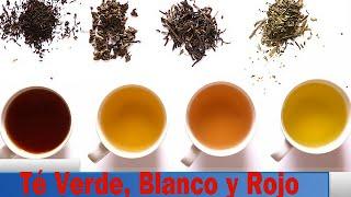 Diferencias Entre El Té Verde, Blanco y Rojo