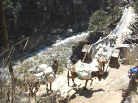 Nepal – Naughty Donkeys.AVI