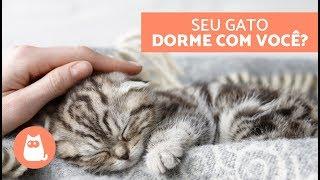 Por que os gatos dormem com os 'tutores? - 5 razões felinas