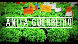 Anita Guerreiro - TAL Festival 2014