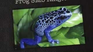 Frog SMS Ringtone (Free)
