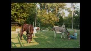 Horse Meditation with Elton John's Live Like Horses