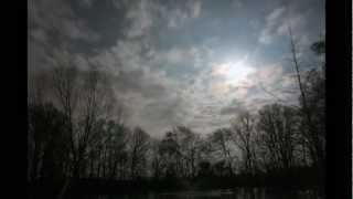 Ponderosa Skies