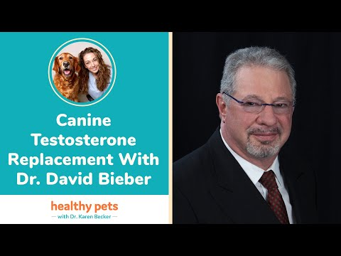 Canine Testosterone Replacement With Dr. David Bieber