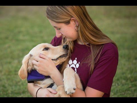 Meet ASU's Sparky's Service Dogs