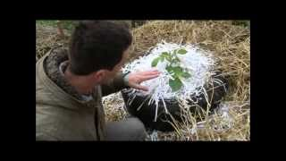 Growing Potatoes without soil, in Tires and straw + shredded paper!