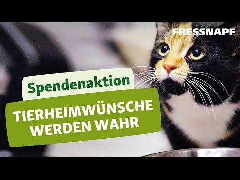 """Die Spendenaktion für Tierheime – """"Tierheimwünsche werden wahr"""""""