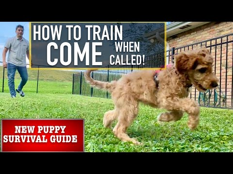 """NEW PUPPY SURVIVAL GUIDE: Train Your Dog to """"COME"""" No Matter What!"""